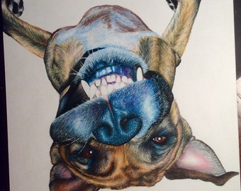Custom Hand Drawn Pet Portrait in Color