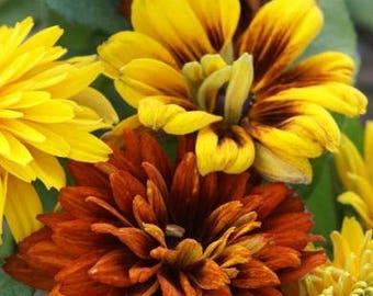 30+ RUDBECKIA Moroccan Sun aka Black Eyed Susan/ Deer & Rabbit Resistant / Perennial / Flower Seeds
