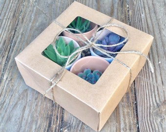 Succulent gift box- perfect for birthdays father's day ect.