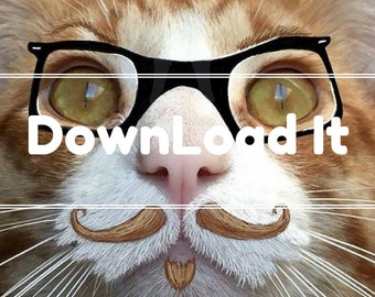 Hipster Cat !