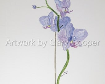 Blue orchid watercolor