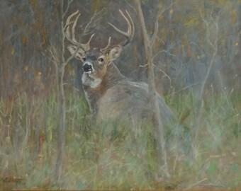 Foggy Morning Whitetail