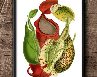 Nepenthes · 8x10 ·  Instant Download · Plants · Carnivorous · Wall · Vintage · Digital File #58