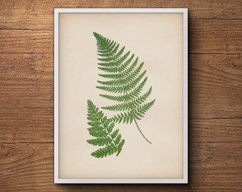 Botanical print of ferns, Fern leaf print, Fern wall print, Vintage botanical illustration, Botanical illustration, Kitchen decor, Wall art