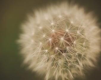 Dandelion, macro, weeds, flower,wishes