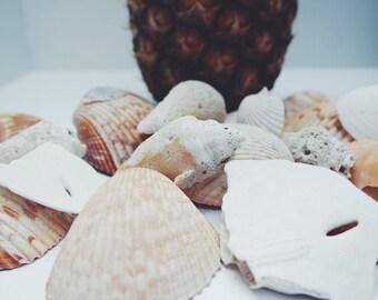 Bulk Seashells,assortment of shells,Craft Seashells,Beach in a box