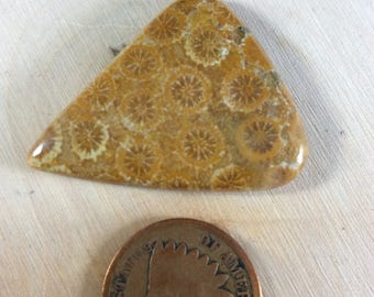 35ct Fossil Coral (Item 229)