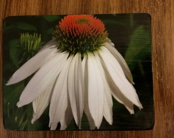Echinechea Photo Wood Block