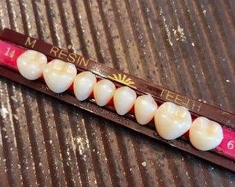 SALE Vintage Resin TEETH 1 Set 8 Individual Dental Oddity Specimen Curiosity Cabinet Jewelry SUPPLIES Halloween Tooth Vintage Medical 7C