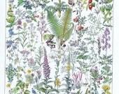 Medicinal Flowers.Floral.fern,Antique.French.Book Page.Original.Colour Plate.Color.Pretty picture.Vintage.Home Deco.Botanic. Gift.art.boho