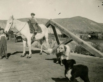 vintage photo 1915 Overall Boys on White Horse Dogs on Bridge