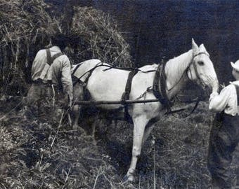 vintage photo Helping Dad Load Hay on Wagon Horses in woods Family together