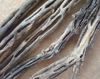 Cholla Cactus Skeleton Wood Sticks Pieces for Crafts Assemblage Jewelry Mixed Media Supplies Natural Organic Found Object