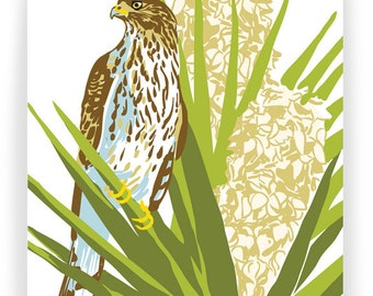 Cooper's Hawk in Flowering Yucca: Box of 8 A2 folding blank cards