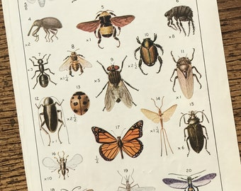 Insects Vintage Small Original Frame Worthy Nature Illustrated Book Page