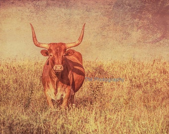 Brown Cow - Longhorn - Cow with Horns - Cow in Field - Longhorns - How Now Brown Cow - Animal Photography
