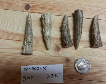 Gnarly Deer Antler Points Tips- 2-2.75 inches- 5 pcs- Lot No. 170302-X
