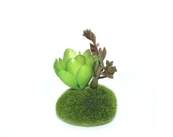 Faux Succulent in Green Moss - Artificial Succulents- Echeveria
