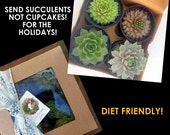 Succulent Gift Box, Winter hardy Variety of Succulent Plants