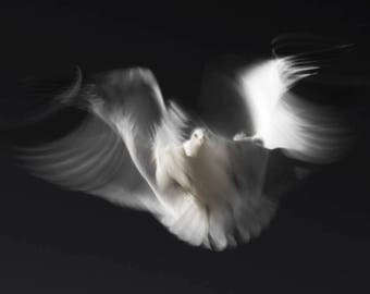 Ghost Bird, Abstract Photography, Limited Edition Art Print, Seagull, Bird Photography, Fine Art Photography Print, Forster