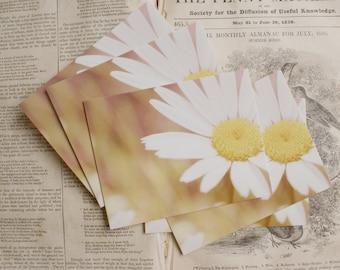Darling Daisy - Set of 5 Postcards
