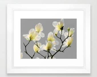 Magnolia, Yellow, Gray, Botanical, fPOE, Fine Art Photography, (6 Sizes)