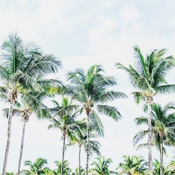 Southern Palms, Fine Art Photography Print, Coastal Home Decor, Palm Tree Print, Cindy Taylor Photography, Cottage Decor, Tropical Print