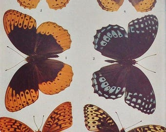 Vintage Butterfly Book Plate