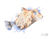 Fish print of watercolor painting F19417, A4 size, Fish watercolor painting print, Contemporary Coastal decor, Nautical wall art print
