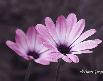 Purple Flower Plant Photography, Wall Print, Botanical Photo, Garden Photography, Flower Photography, Purple Flower Photo