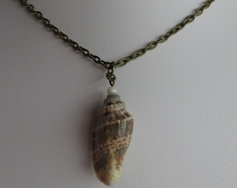 Shell Necklace, Natural Shell, Simple Necklace, Minimalist, Antique Brass
