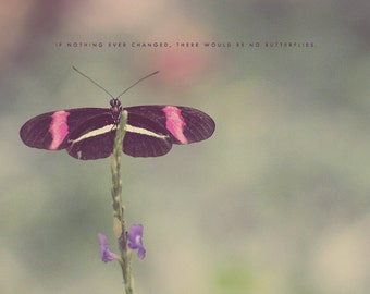 Pink Butterfly, Butterfly Wings, Butterfly Art, Typography Photo, Butterfly Photo, Butterfly Print, Butterfly Gift, Butterfly Decor