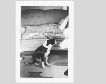 Say What found photo old vernacular photography social realism vintage original snapshot
