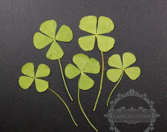 1pack dry pressed clover leaf DIY material for glass dome resin supplies 10pcs each pack 1503139