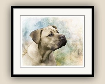Italian Mastiff, Cane Corso Portrait with Pastel Colors, Guardian Dog Companion, Dog Lover Art, Fine Art Photography Print