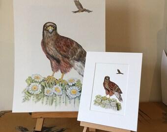 LIMITED EDITION Harris Hawk on Saguaro Cactus, bird of prey drawing, bird art commission, Hawk Art, Bird of Prey art