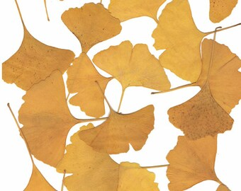 Wedding Table or Thanksgiving Table Real Pressed leaves as seen in Midwest Living magazine