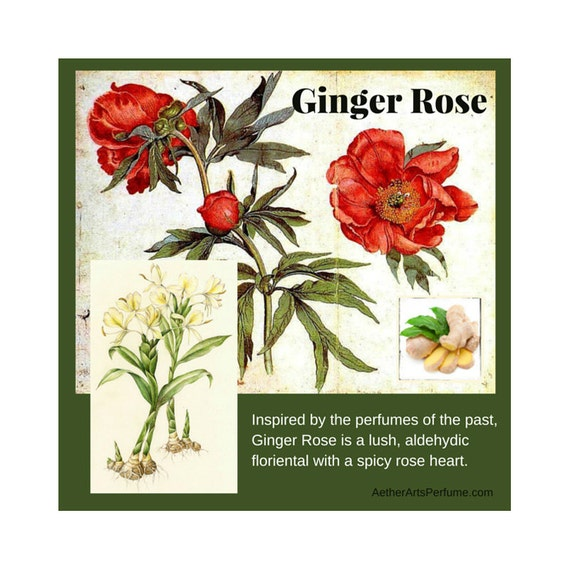 Ginger Rose Perfume Inspired by the perfumes of the past, this lush, aldehydic floriental with a spicy rose heart is all vintage glamour