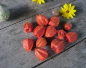 Chinese lantern, Dried flowers, Physalis, Natural pods, home decor Floral Supplies - set of 10
