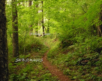 Lost Creek Trail, DIGITAL DOWNLOAD, trail decor, forest trail, Oregon forest trail,, Fine Art  Photography by Sharon at HikingTrails