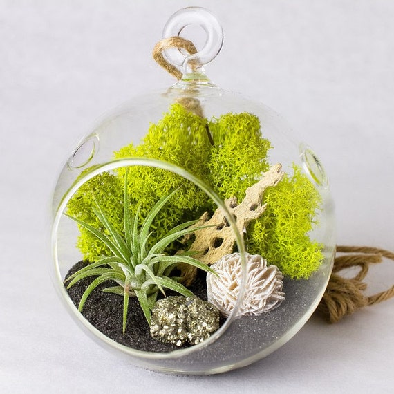 Hanging Terrarium Kit with Airplant, Pyrite and Gypsum Desert Rose || Rustic Modern || Small Round