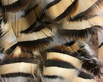 Chukar partridge feathers
