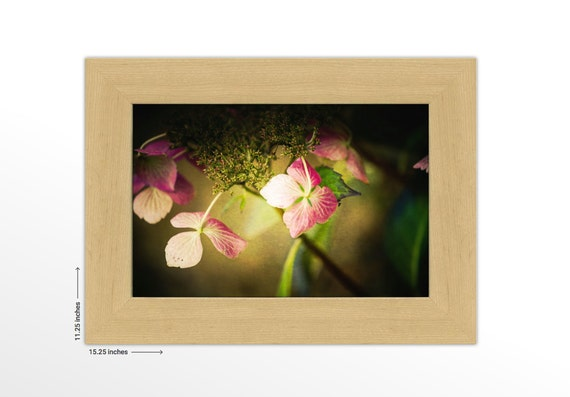 Pink Hydrangea Blossoms. Flower Lover's Wall Decor. Macro Wall Art. Nature Photography. Framed Fine Art Print. FREE SHIPPING.