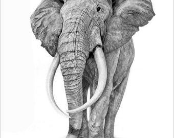 Elephant Pencil drawing Print