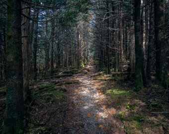 Appalachian Trail #1 - GSMNP - Great Smoky Mountains National Park - Hiking - Nature - Landscape - Tennessee - Fine Art - Appalachian Trail