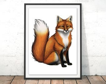Red Fox Illustration by Lyndsey Green Red Fox Art Print Fox Drawing Fox Wall Art British Wildlife Giclee Art Print Red Fox Poster