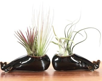 whale vase / whale air plant holder / whale bud vase / temmoku gold chocolate brown whale / one whale