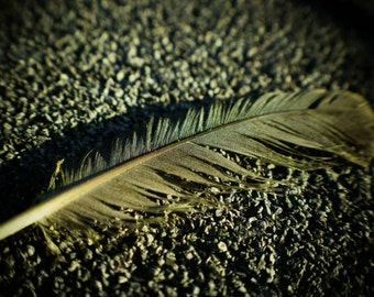A feather a day...