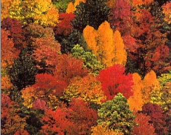 Bold, Beautiful Shades of Fall, Trees, Landscape, Elizabeth's Studios, 309-Muli By 1/2 yd