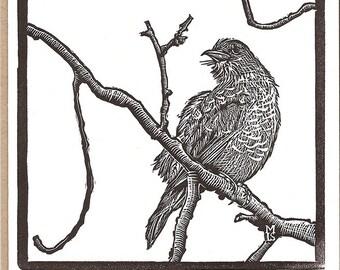 American Robin Letterpress Card